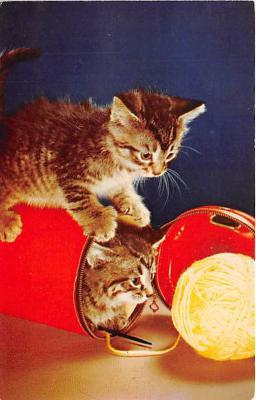 cat002254 - Cat Post Card Old Vintage Antique