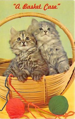 cat002261 - Cat Post Card Old Vintage Antique