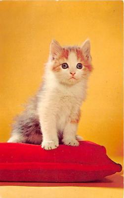 cat002263 - Cat Post Card Old Vintage Antique
