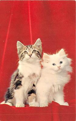 cat002266 - Cat Post Card Old Vintage Antique