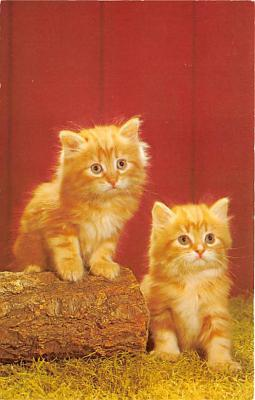cat002273 - Cat Post Card Old Vintage Antique
