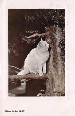 cat002276 - Cat Post Card Old Vintage Antique
