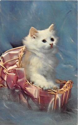 cat002277 - Cat Post Card Old Vintage Antique