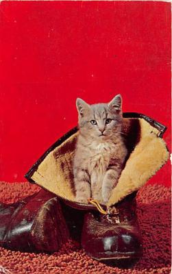 cat002288 - Cat Post Card Old Vintage Antique