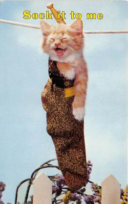 cat002293 - Cat Post Card Old Vintage Antique