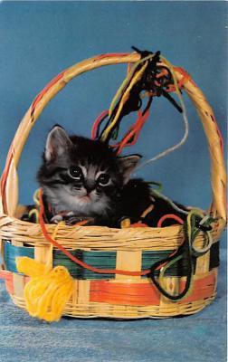 cat002294 - Cat Post Card Old Vintage Antique