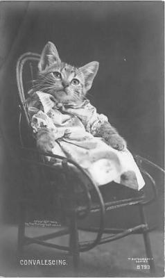 cat002295 - Cat Post Card Old Vintage Antique