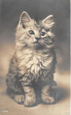 cat002310 - Cat Post Card Old Vintage Antique