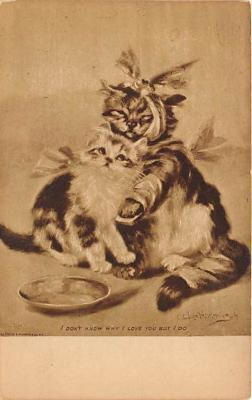 cat002311 - Cat Post Card Old Vintage Antique