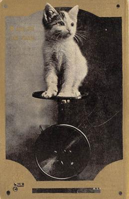 cat002316 - Cat Post Card Old Vintage Antique
