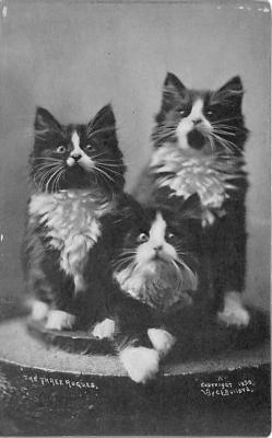 cat002317 - Cat Post Card Old Vintage Antique