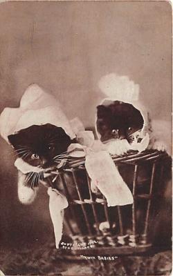 cat002326 - Cat Post Card Old Vintage Antique