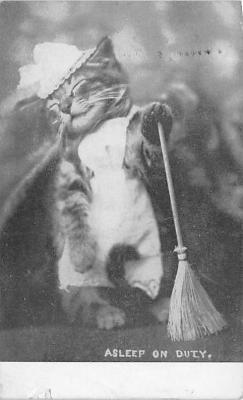 cat002329 - Cat Post Card Old Vintage Antique