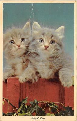 cat002333 - Cat Post Card Old Vintage Antique