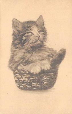 cat002337 - Cat Post Card Old Vintage Antique