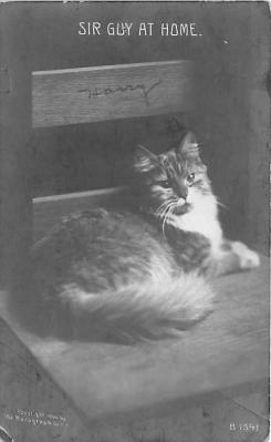 cat002339 - Cat Post Card Old Vintage Antique
