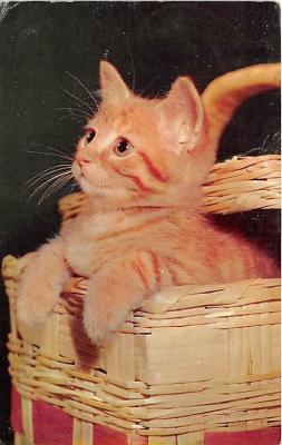cat002340 - Cat Post Card Old Vintage Antique