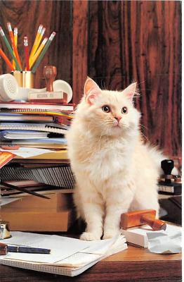 cat002344 - Cat Post Card Old Vintage Antique