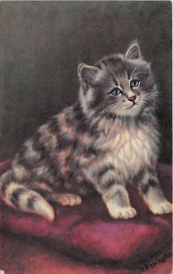 cat002345 - Cat Post Card Old Vintage Antique