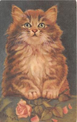 cat002353 - Cat Post Card Old Vintage Antique