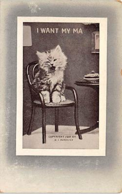 cat002355 - Cat Post Card Old Vintage Antique