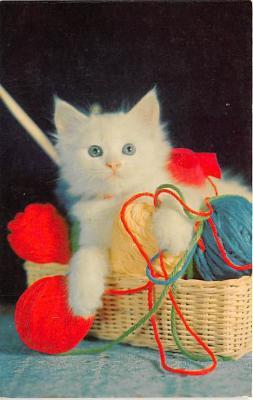 cat002366 - Cat Post Card Old Vintage Antique