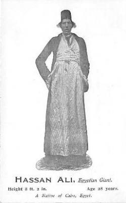 Hassan Ali, Cairo, Egyptian Giant