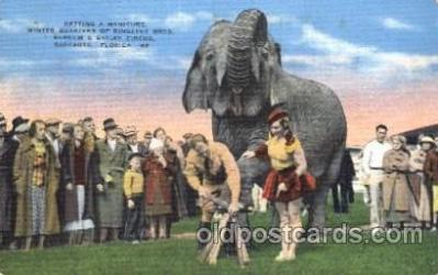 cir006175 - Barnum and Bailey Circus Circus Postcard Post Card