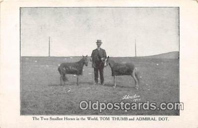 Two Smallest Horses, Thom Thumb & Admiral Dot