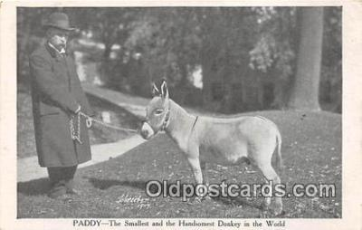 Paddy, Smallest Donkey