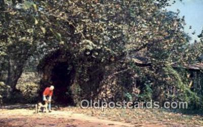cou100427 - Cromer's Mill, Carnesville, GA USA Covered Bridge Postcard Post Card Old Vintage Antique