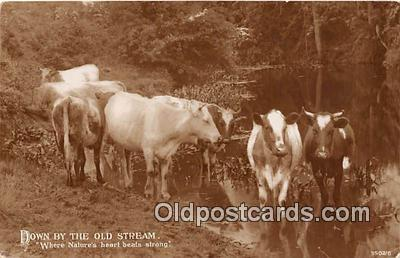cow000088 - Down by the Old Stream  Postcard Post Card
