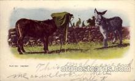 cam001187 - Camera Post Card Postcard