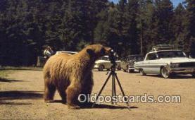 cam001883 - Camera Postcard, Post Card Old Vintage Antique