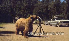 cam001884 - Camera Postcard, Post Card Old Vintage Antique