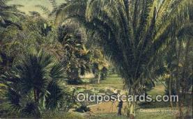 cam001891 - Castleton Gardens Jamaica Camera Postcard, Post Card Old Vintage Antique