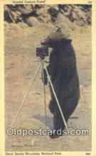 cam001921 - Great Smoky Mnt. National Park Camera Postcard, Post Card Old Vintage Antique
