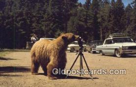 cam001922 - Camera Postcard, Post Card Old Vintage Antique