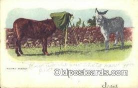 cam001941 - Camera Postcard, Post Card Old Vintage Antique
