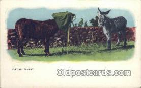 cam100066 - Camera Postcard Post Card Old Vintage Antique