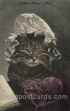 cat001151 - Cat, Cats, Postcard Post Card