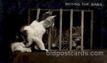 cat001160 - Cat Cats Postcard Post Card
