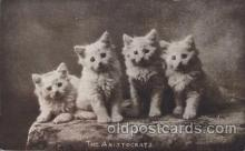 cat001252 - The Aritocrats Cat, Cats Postcard Post Card