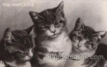 cat001256 - Cat, Cats Postcard Post Card