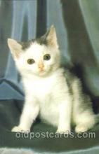 cat001263 - Cat, Cats, Postcard Post Card