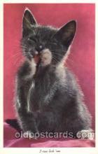 cat001264 - Cat, Cats, Postcard Post Card