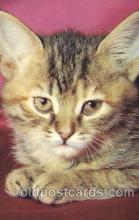cat001266 - Cat, Cats, Postcard Post Card