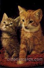 cat001267 - Cat, Cats, Postcard Post Card