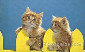 cat001297 - Cat, Cats, Postcard Post Card