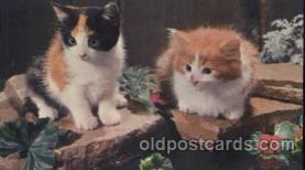 cat001319 - Cat, Cats, Postcard Post Card